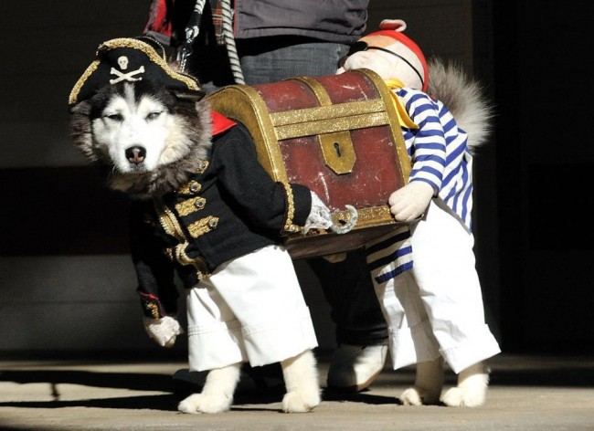 Dog-Pirate-Costume-650x472