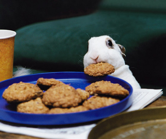 cookie-stealing-bunny_560