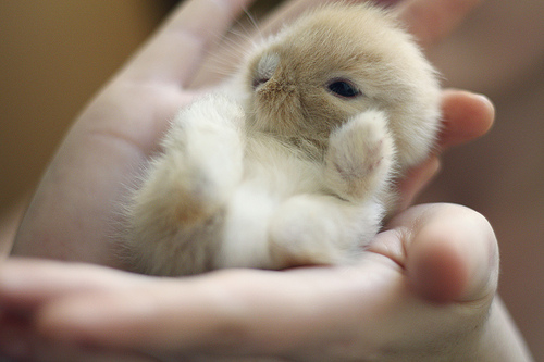 cute-little-baby-bunny