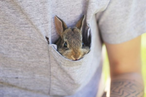 l-Bunny-pocket