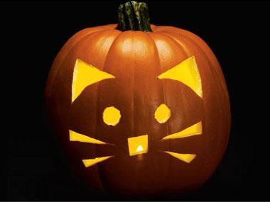 cat-pumpkin