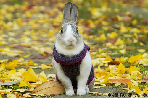 Bunny fall fashion scarves edition hop to pop