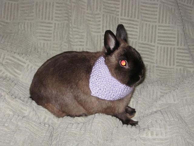 bunny-bandana