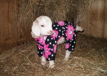 Bedtime At Cute O'Clock: Animals in Pajamas - Hop to Pop