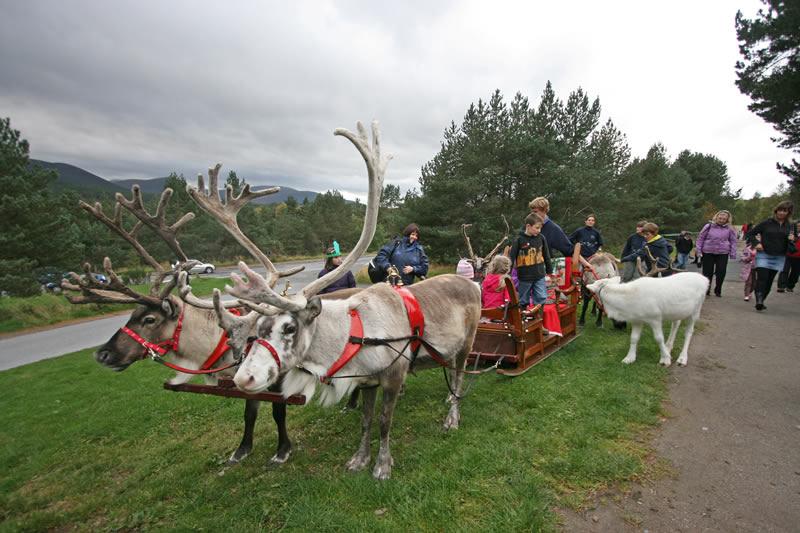 ChristmasReindeerSleighGrass1