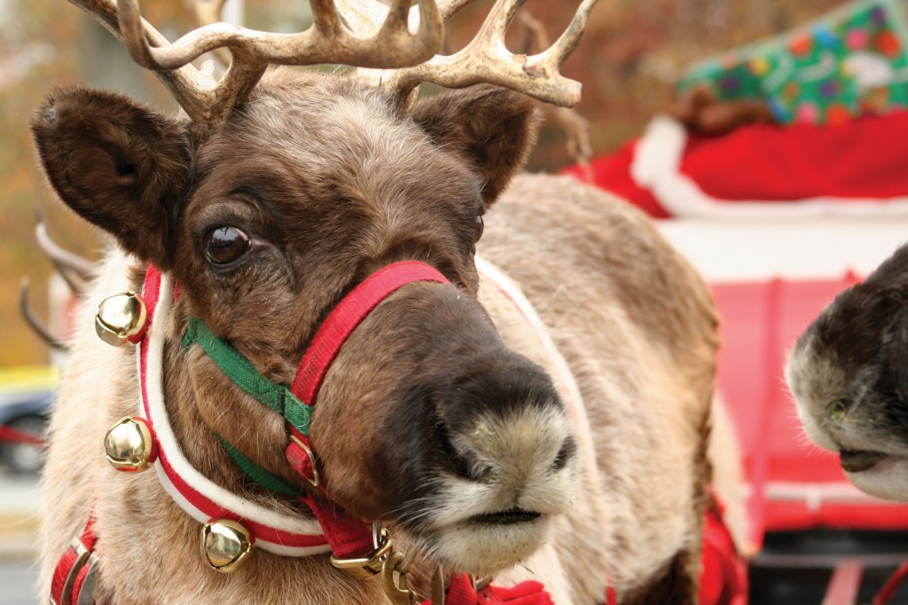 Titanic-Reindeer-Christmas