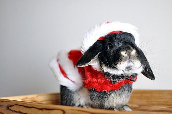 Xmas-Rabbit-l