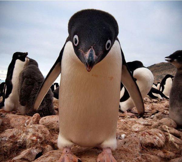 derp-penguin