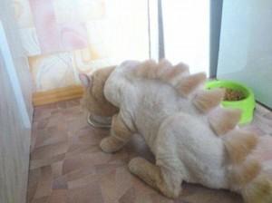 t-rex-cat