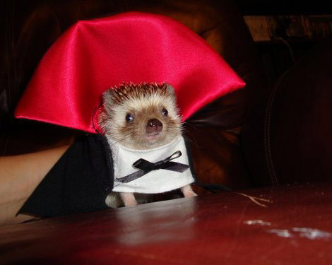 dracula-hedgehog