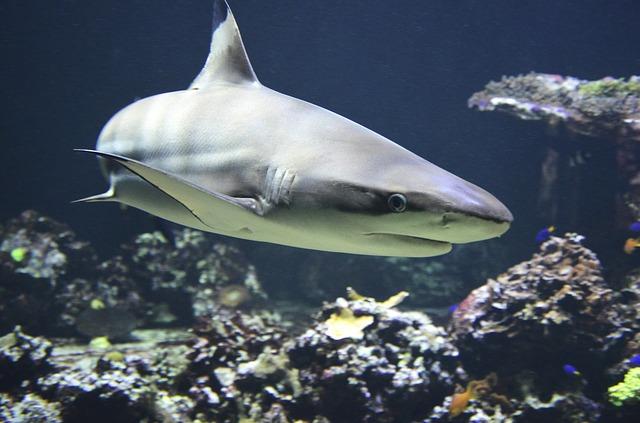 shark-day