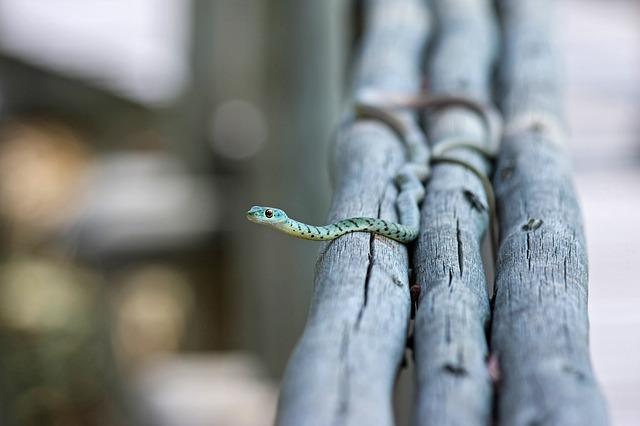 snake-day