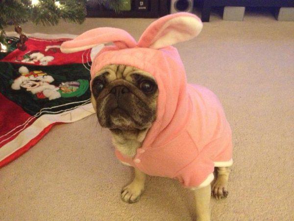 bunnypug