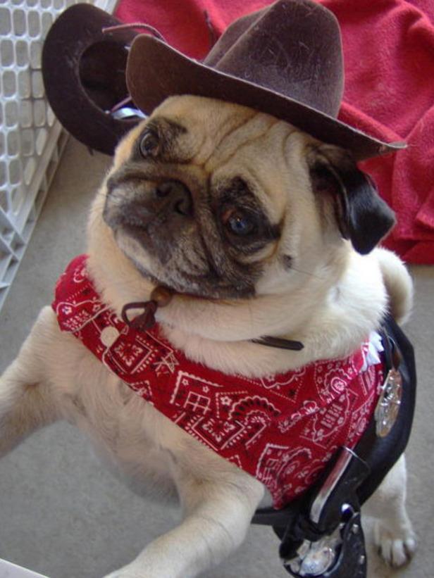 cowboypug