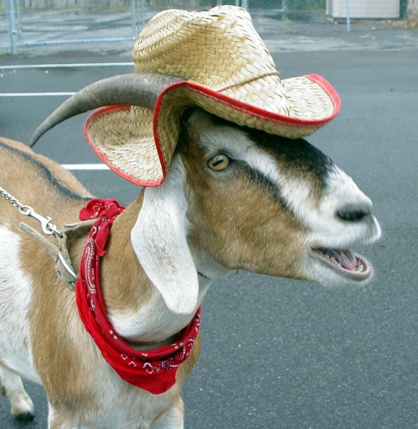 farmergoat