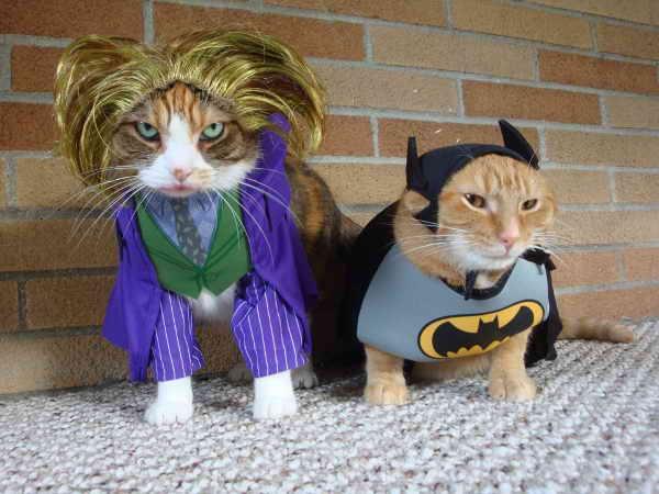 jokerbatmancats