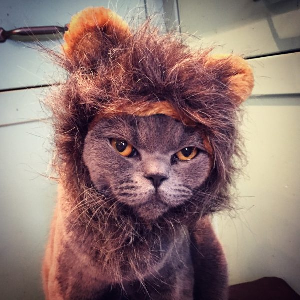 lionkitty