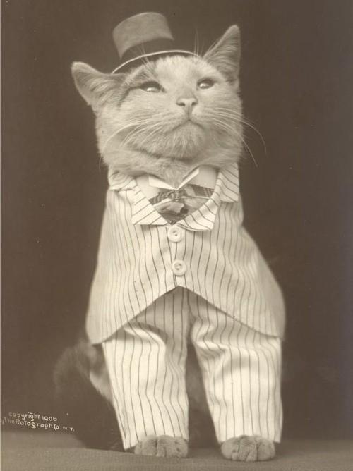 oldschoolcat