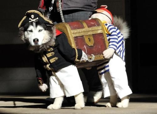 piratedog