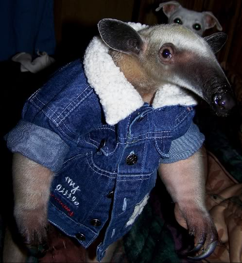 roughneckanteater