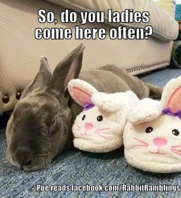 Rabbit Memes Archives Hop To Pop