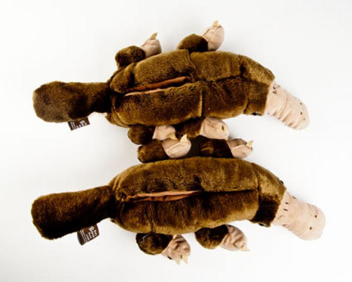 Platypus Animal Slippers 4